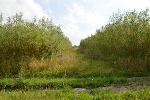 En ledeline i terænnet som tiltrækker alle former for vildt som fasaner,agerhøns,harer råvildt mm.